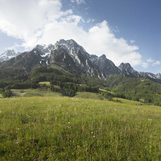 Bergwiese-Sommer Leogang